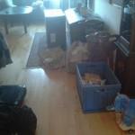 Flytterod i stuen før oprydning - Elefanten Bodil ser på
