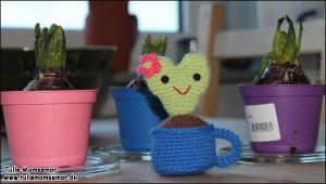 Valentine hjerte kaktus, i jord, i tekrus